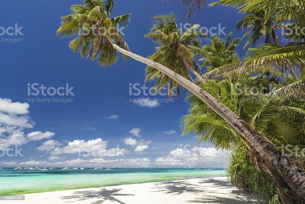 Tropical beach with palm and white sand royalty-free stock photo