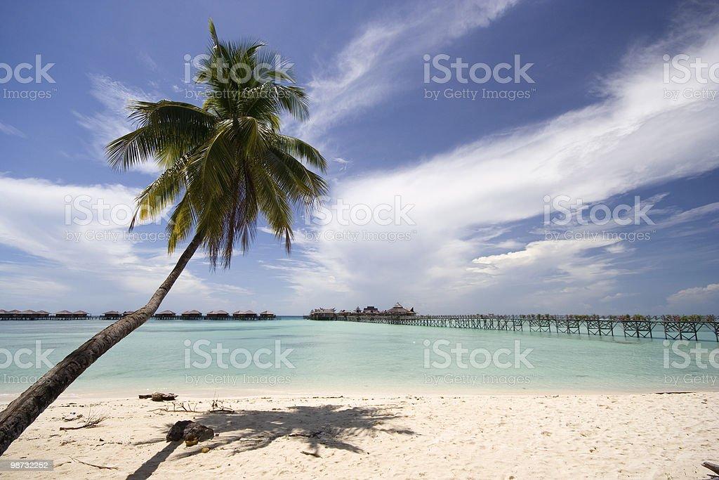 Тропический пляж с пальмами Стоковые фото Стоковая фотография