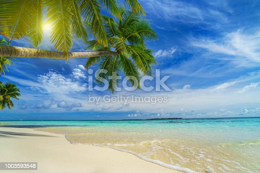 istock Tropical beach with palm trees in summer 1003593548