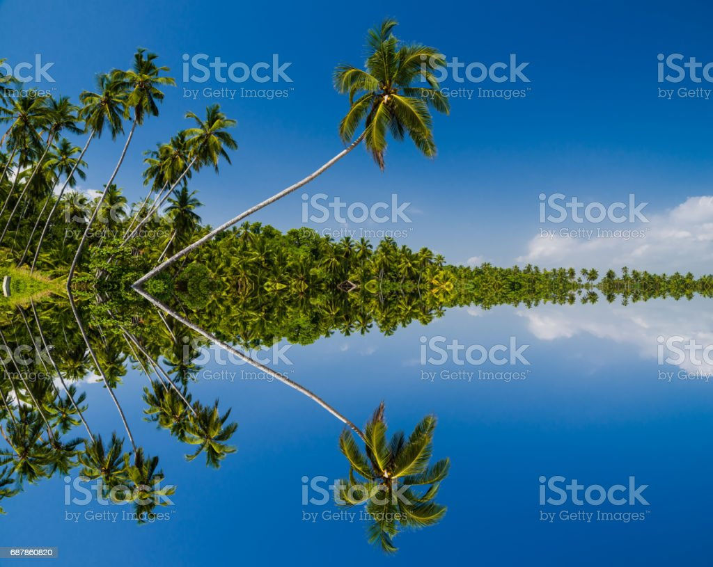 Tropical beach with palm trees. stock photo