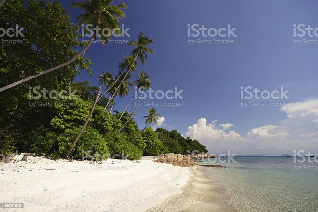 Tropical Beach With Palm Trees royalty-free stock photo