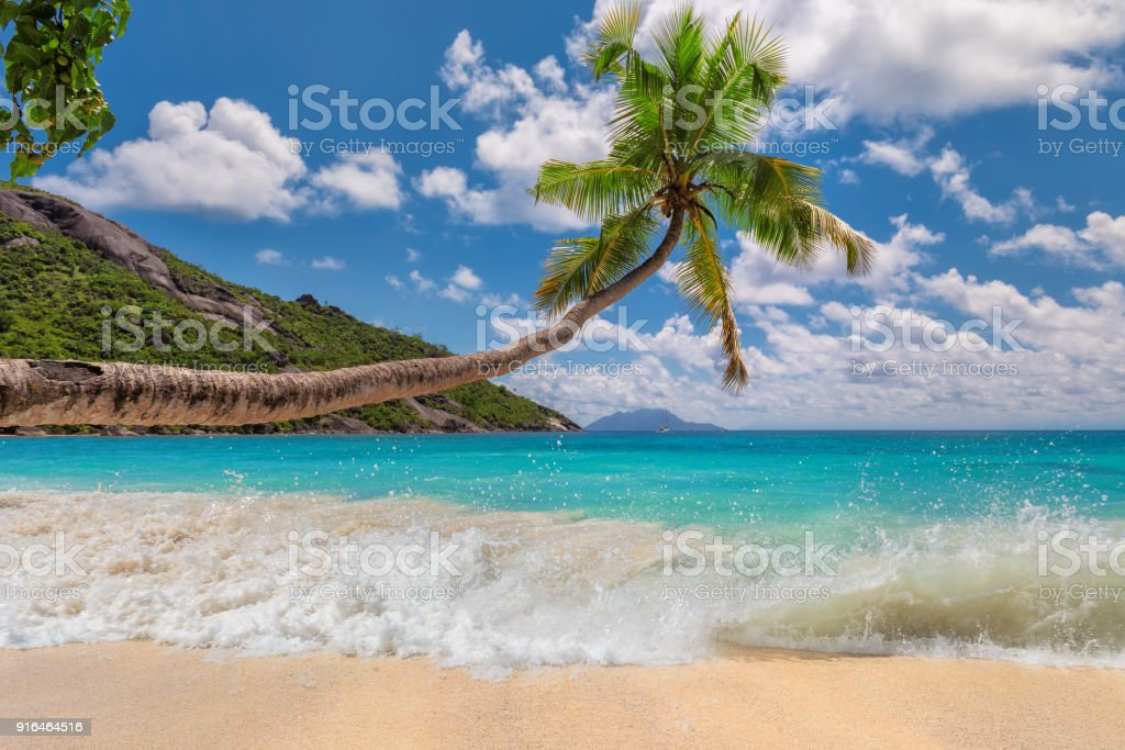 Tropical beach with sea wave and coconut palm stock photo