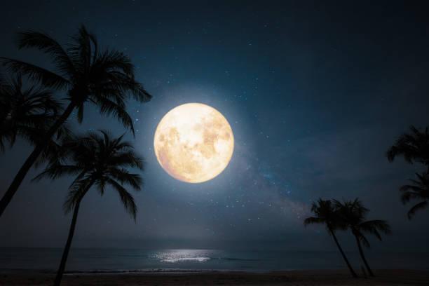tropischer Strand mit Stern und Vollmond am Nachthimmel. – Foto
