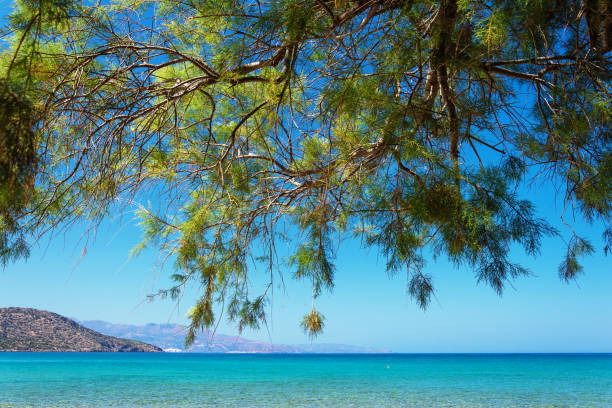 Tropical beach with tamarisk and turquoise water in Istron, Crete, Greece Tropical beach with tamarisk and turquoise water in Istron, Crete, Greece tamarix tree stock pictures, royalty-free photos & images