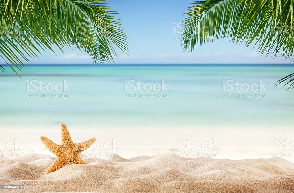 Tropical beach with various shells in sand stock photo