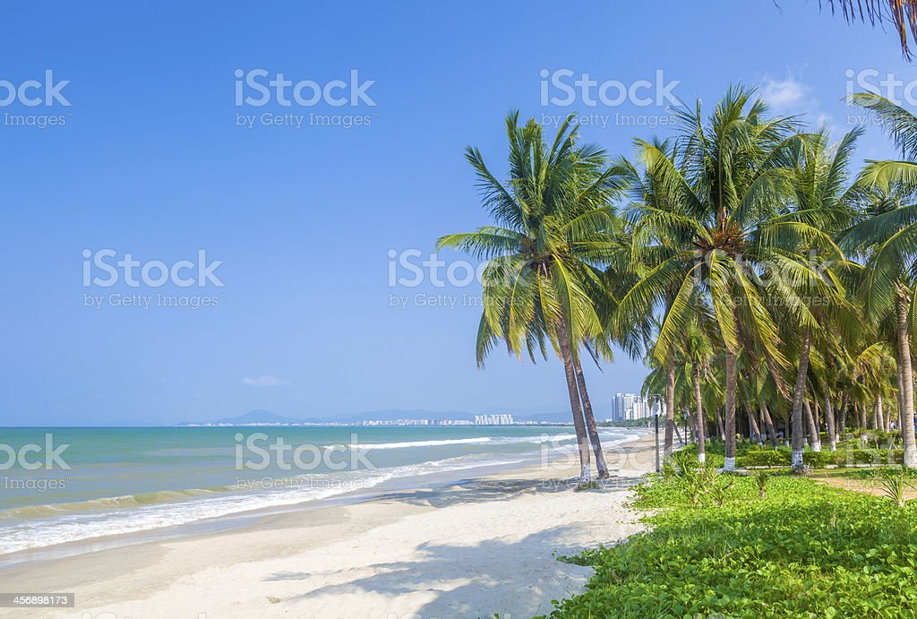 Tropical beach with white sand, palm trees, and the ocean stock photo
