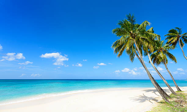 tropical beach with white sand & palm trees - mar dei caraibi foto e immagini stock