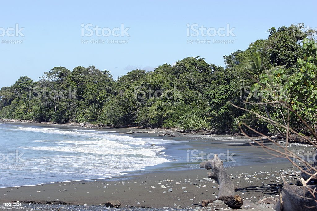 Tropical beach/shore royalty-free stock photo