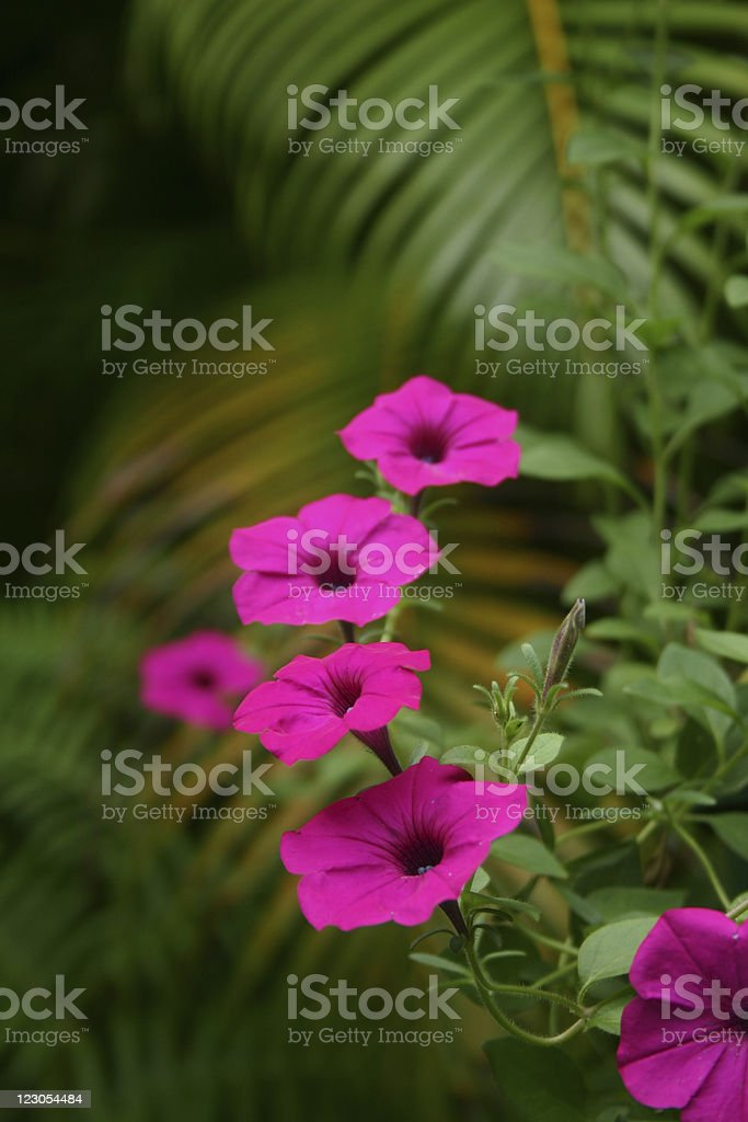Tropical Beauty stock photo
