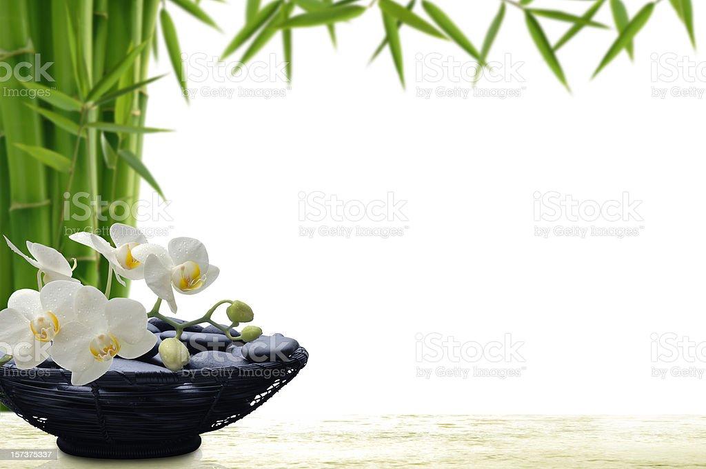 Tropical Beauty - Royalty-free Bamboo - Plant Stock Photo
