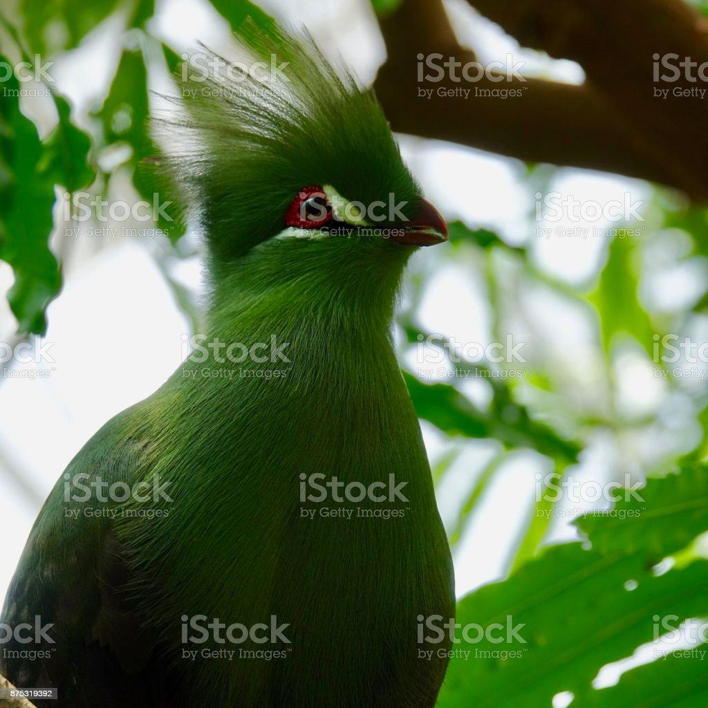 Tropical bird,  a real beauty stock photo
