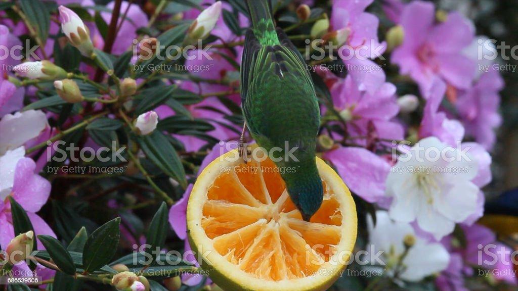 flores y aves tropicales foto de stock libre de derechos