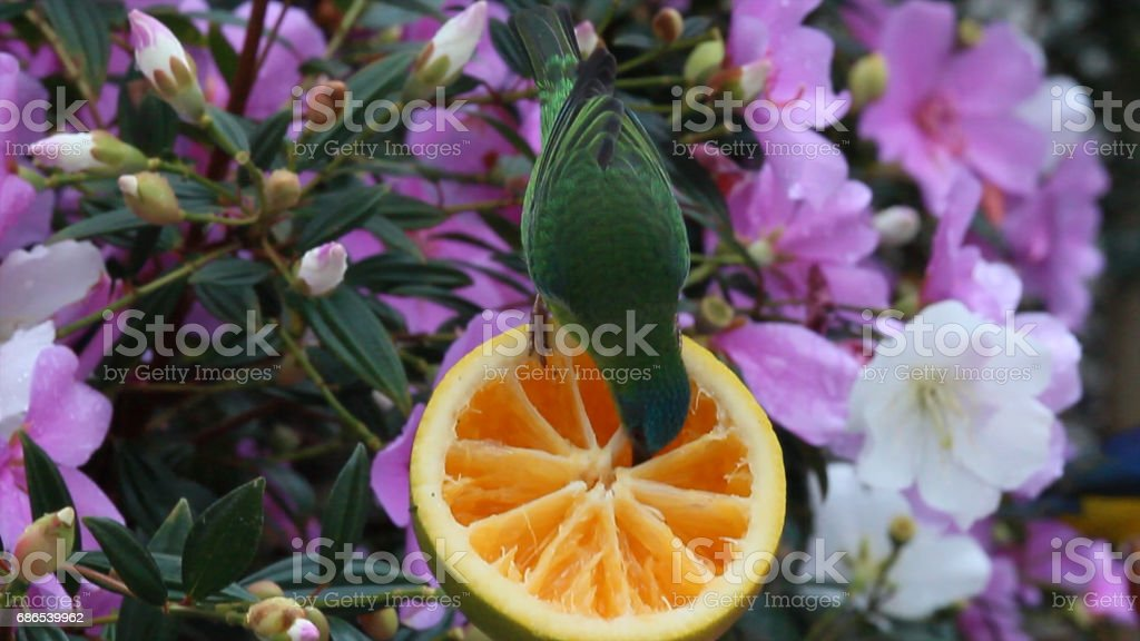 tropical bird and flowers stock photo