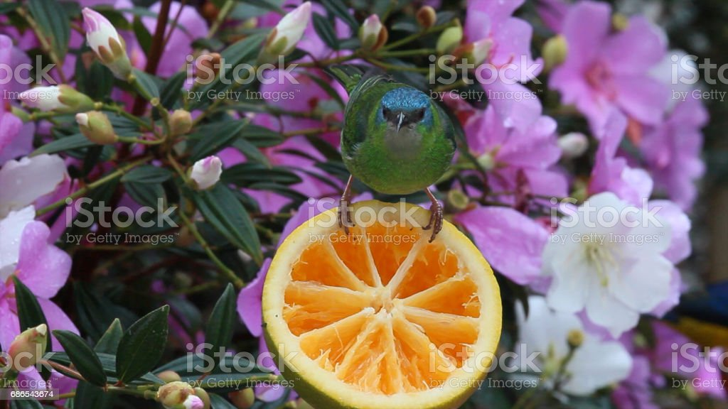 tropical bird and flowers foto stock royalty-free
