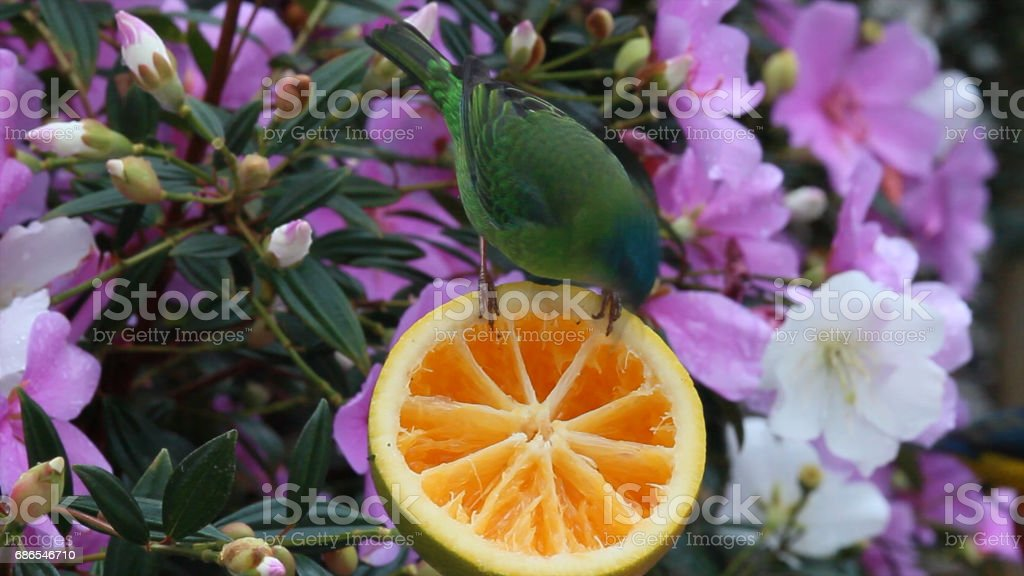 tropical bird and flowers royalty-free stock photo