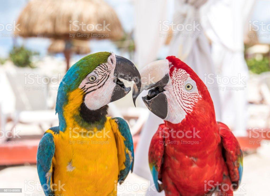 Tropical bird close-up. stock photo