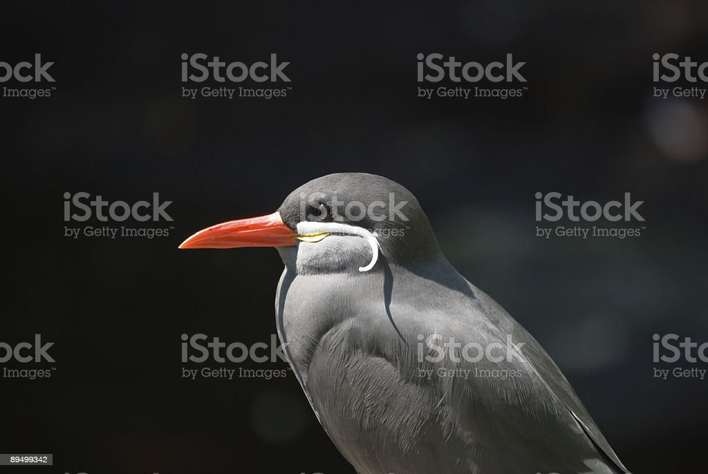 Egzotyczny ptak słońca kąpieli zbiór zdjęć royalty-free