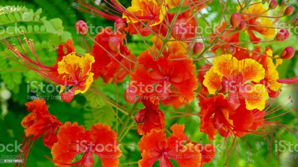 Tropical blossom stock photo