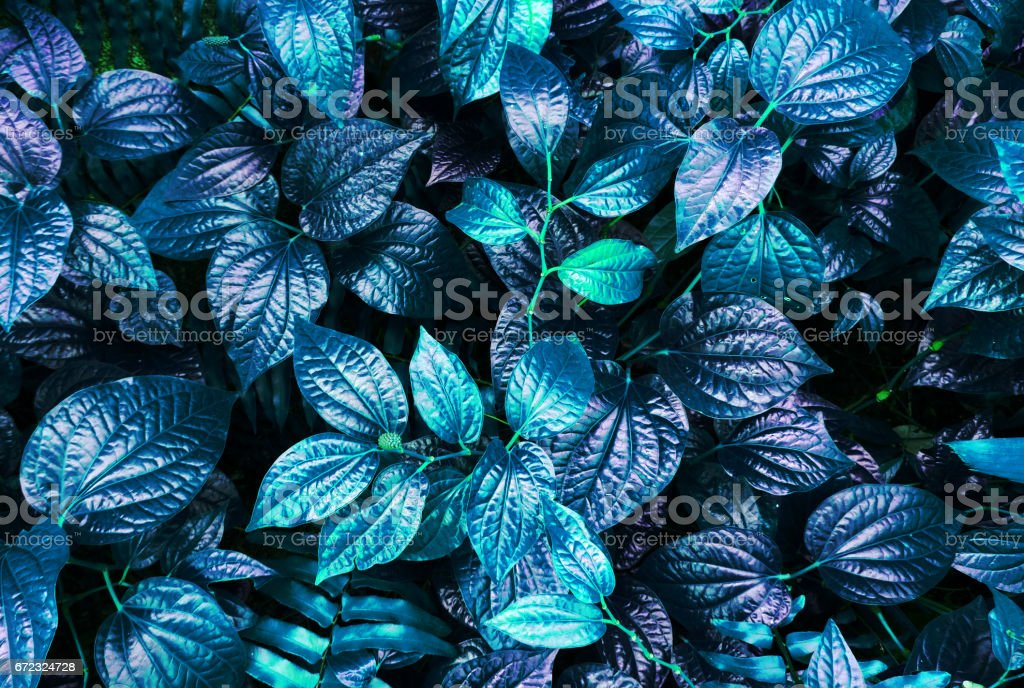 tropical blue leaf glow in the dark background. stock photo