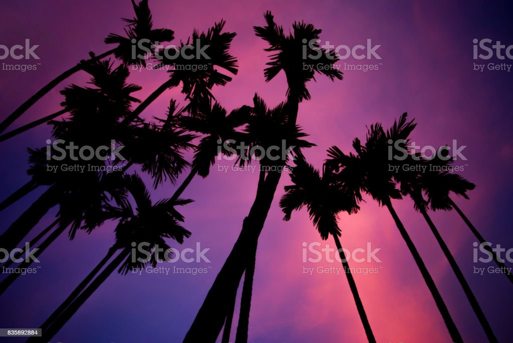Tropical blur background of silhouette palm trees against twilight sky. stock photo