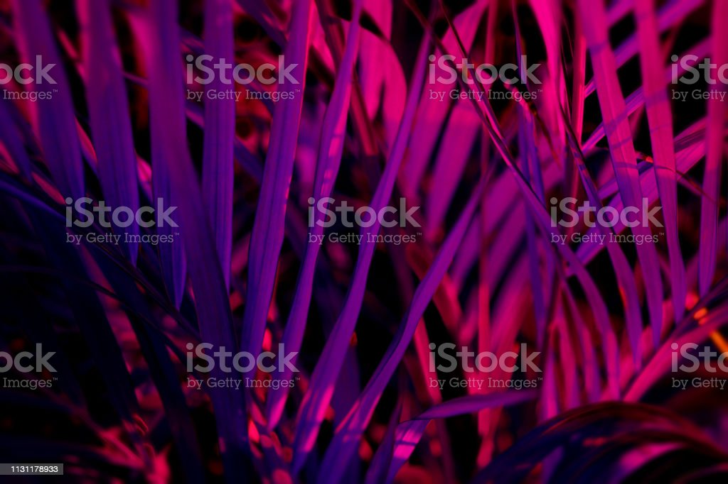 Tropical blurred leaf forest glow in the black light background. High contrast. stock photo