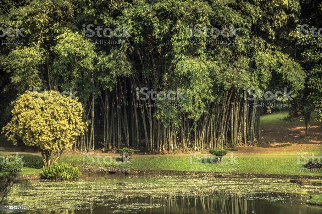 Tropische botanische tuin met bamboe landschap met landschap design in Royal Garden Peradeniya in Sri Lanka dichtbij Kandy omgeving foto