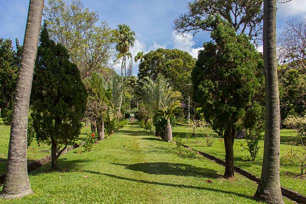 tropische botanische gärten - st. vincent und die grenadinen stock-fotos und bilder
