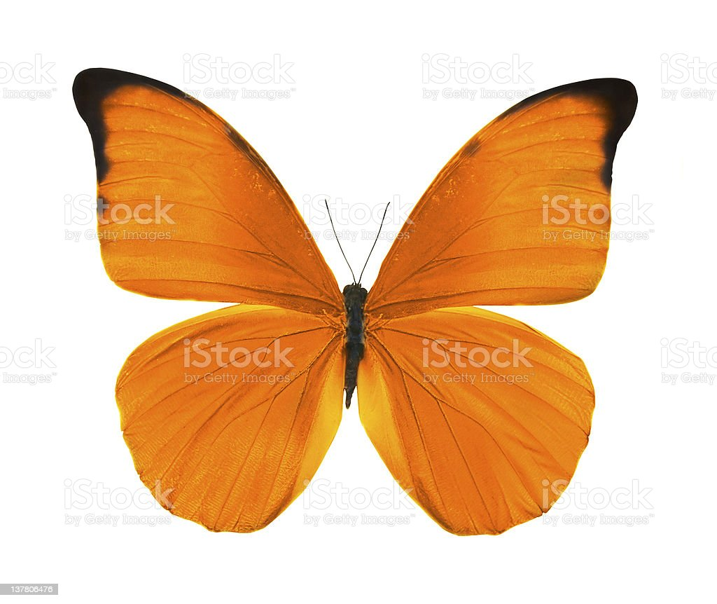 tropical bright orange butterfly royalty-free stock photo