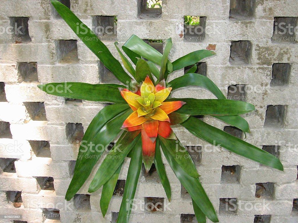 Tropical Bromeliad royalty-free stock photo