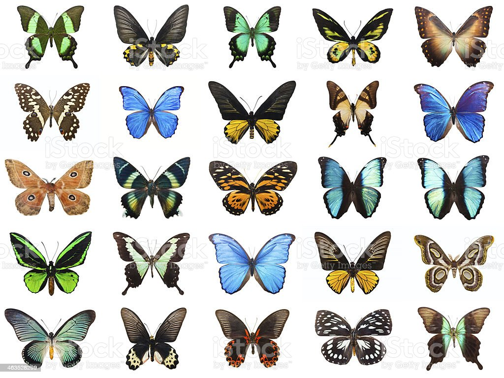 Tropical butterflies stock photo