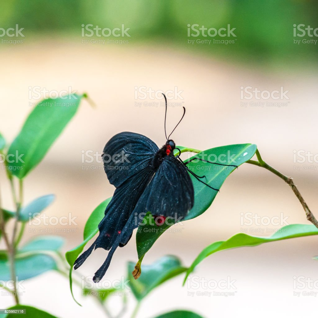 Tropical butterfly in a garden stock photo