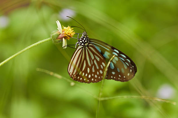 Tropical butterfly on yellow flower in green grass stock photo
