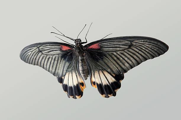 Tropical butterfly picture id176906133?b=1&k=6&m=176906133&s=612x612&w=0&h=q4znybuo4y26rzdlrkunowcp7lzmpdr9whjrsk3ikvm=