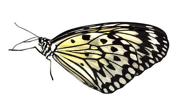 Tropical butterfly picture id484746525?b=1&k=6&m=484746525&s=612x612&w=0&h=q3wjhgeidce4qr5zzp9q xmqdik0wsr ujffgbh52xk=