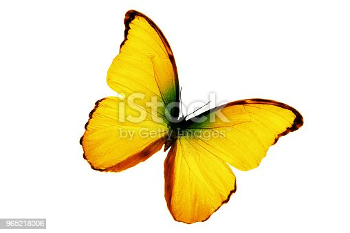999676880 istock photo tropical butterfly yellow isolated on white background 965218006