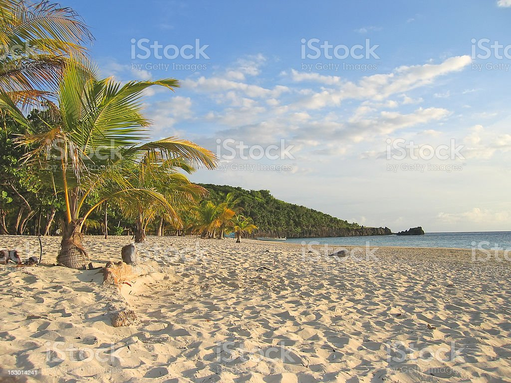 Tropical caraibe beach with palm trees and white sand stock photo