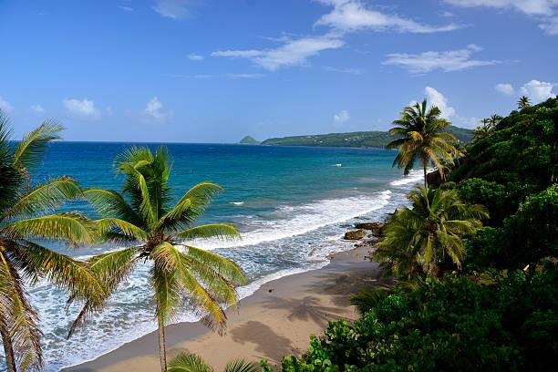 Tropical caribbean beach island stock photo