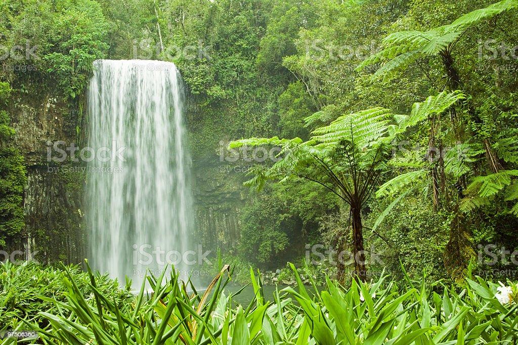 Tropical Cascading Waterfall in Millaa-Millaa royalty-free stock photo