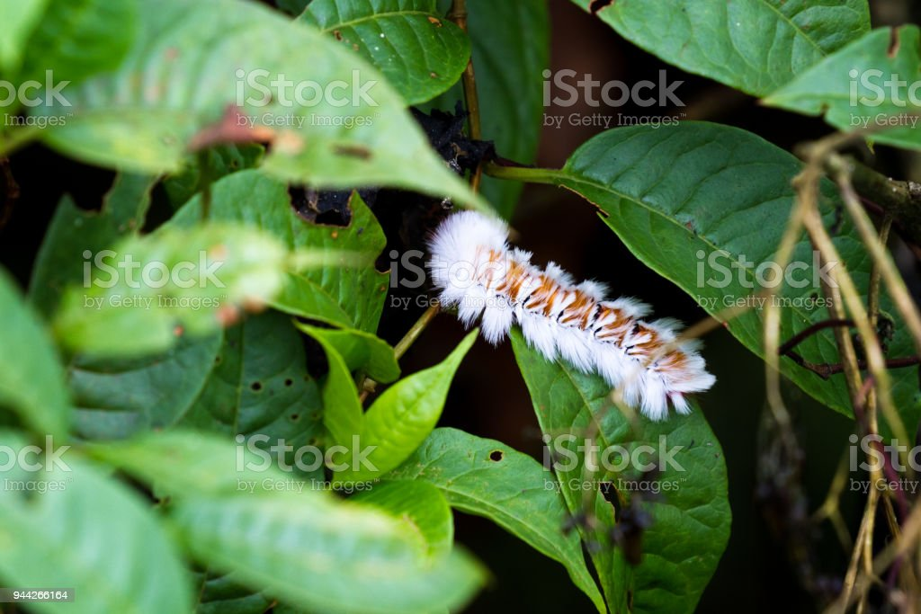 tropical caterpillar stock photo