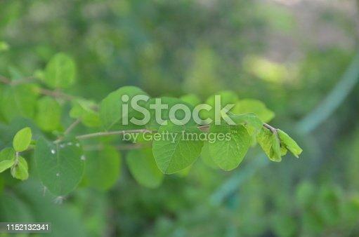 915520716istockphoto Tropical Climate, Rainforest Green Color Backgrounds Tropical Rainforest, Tropical Tree serbia Tree Bush, Lush Foliage Forest Fern Rain, Extreme Terrain green Plant nature europe Germany Singapore Botany 1152132341