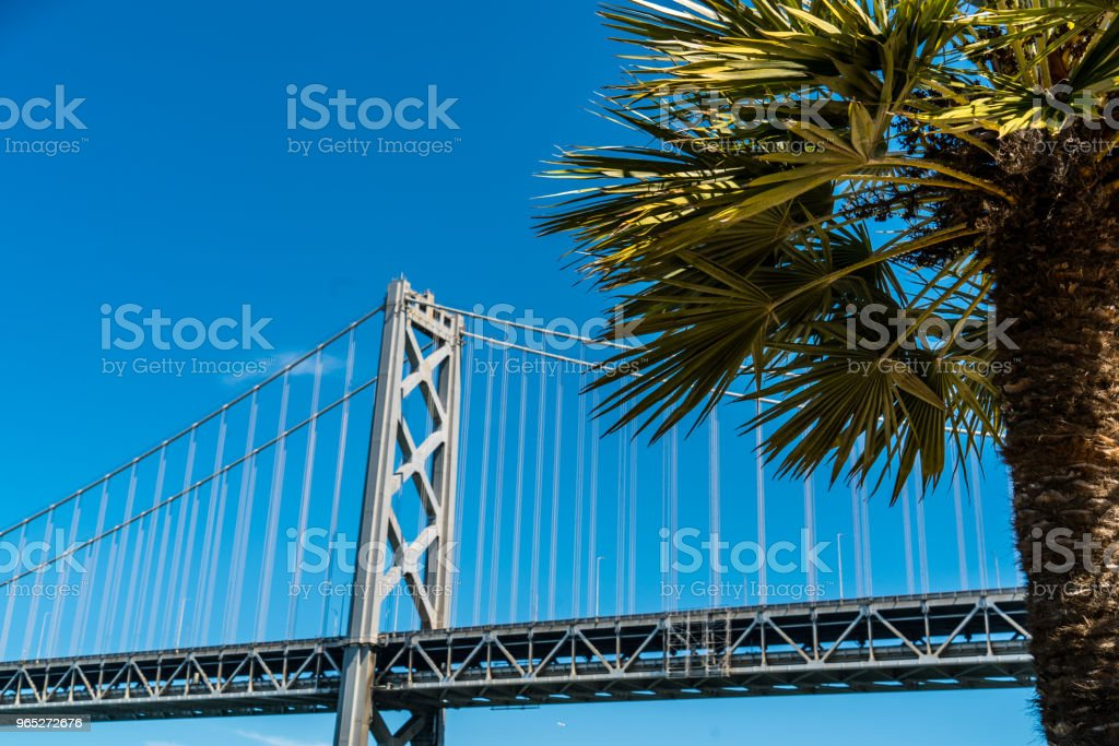 Tropical close up with palm tree Oakland Bay Bridge to San Francisco , California Suspension bridge over the Bay Area zbiór zdjęć royalty-free