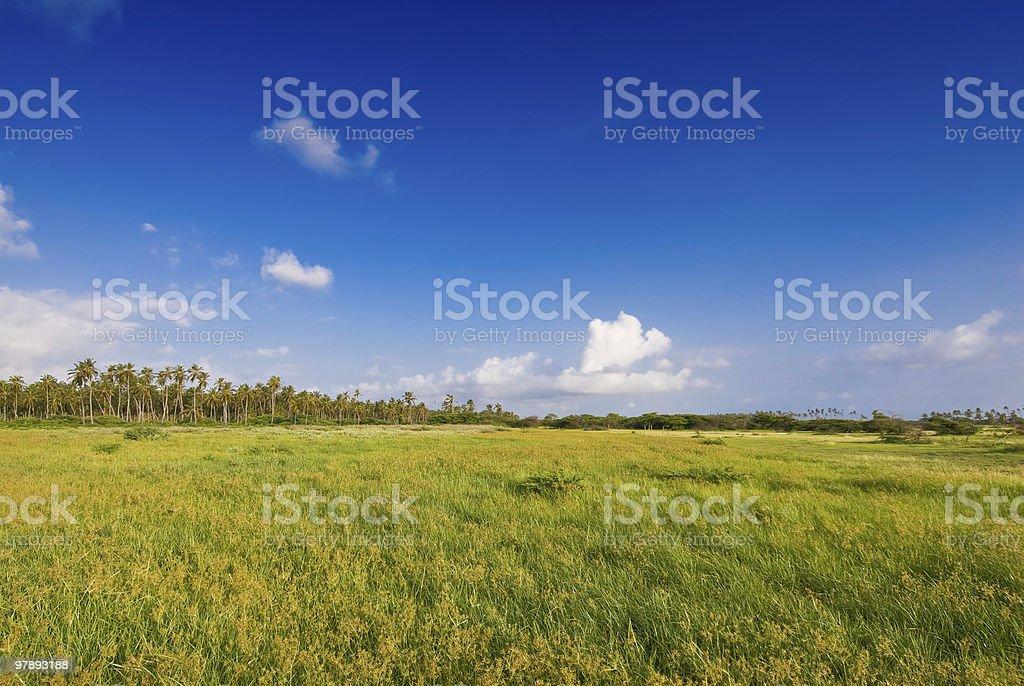 Tropical coastal green field royalty-free stock photo
