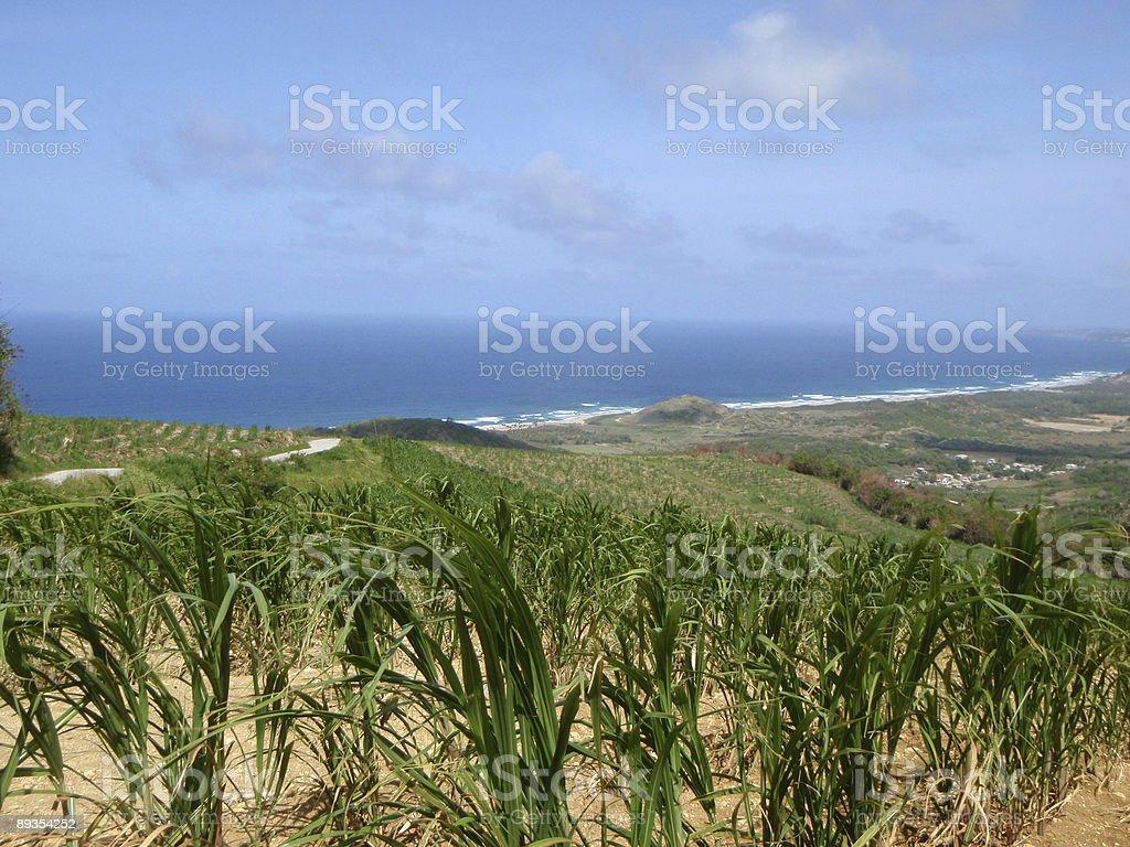 Tropical coastline and sugar cane plantation royalty-free stock photo