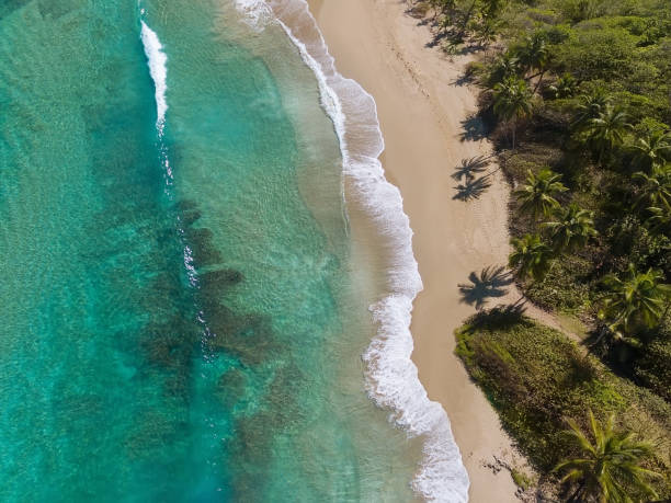 Tropical coastline, view frome above stock photo