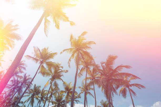 열 대 코코넛 야 자 나무 빈티지 톤 - 야자 나무 arecales 뉴스 사진 이미지