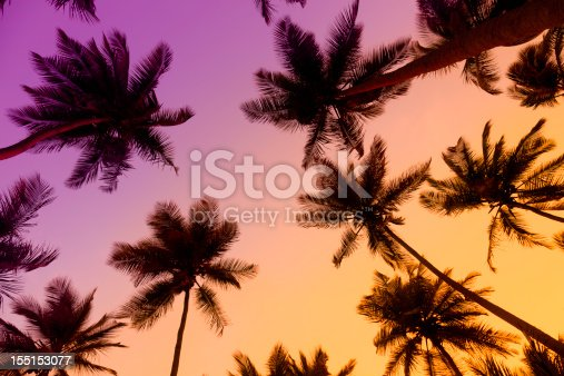 Tropical beach during twilight. Coconut trees in silhouettes