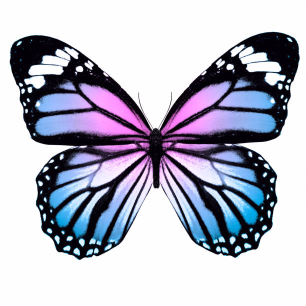 tropical colorful butterfly isolated on white background - butterfly stock pictures, royalty-free photos & images
