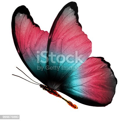 istock tropical  colorful flying butterfly isolated on white background 999676880
