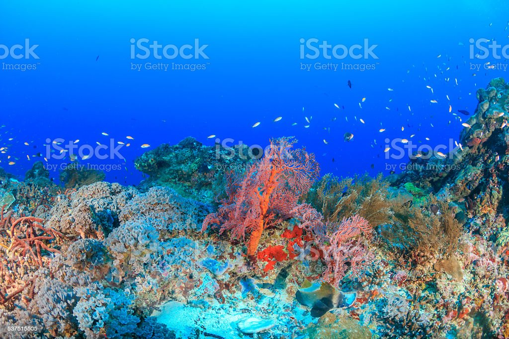 Tropical Coral Reef stock photo