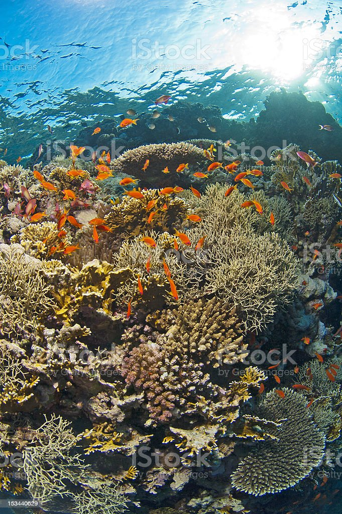 Tropical coral reef scene stock photo